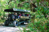 Everglades & Miami Adventure Tour