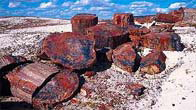 Petrified Forest National Park Tours