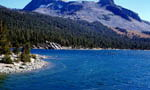 4-Day Monterey-San Francisco-Reno-Lake Tahoe-Sequoia Bus Tour