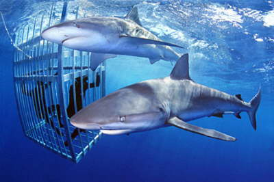 North Shore Shark Cage Adventure Tour