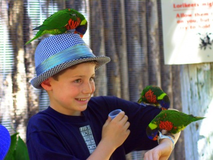 Kid having fun with Rainbow Parakeets
