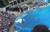 1-Day San Diego - Sea World Tour