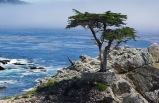 5-Day San Francisco, 17 Miles Scenic Drive Tour