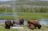 7-Day Yellowstone National Park, Mt. Rushmore, Arches National Park & Lenwood Tour (Start in LV, End in LA) **One night stay in Canyon Lodge inside Yellowstone Park**