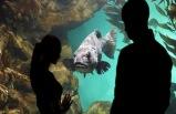 California Academy of Sciences Aquarium Adventure Tour