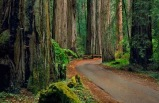2 Day Redwoods and Wine Country Tour From San Francisco