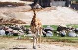 4-Day San Diego, Legoland, Sea World, Wildlife Safari, Balboa Park Tour from San Francisco **Holiday Special Tour**