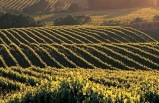 Wine Country Napa Valley Shuttle Day Tour