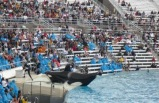 6-Day San Francisco, Yosemite National Park, Sea World and Universal Studios Bus Tour Package