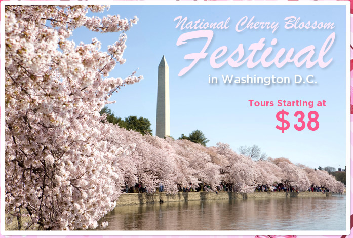 National Cherry Blossom Festival in Washington D.C. Tours Starting at $38